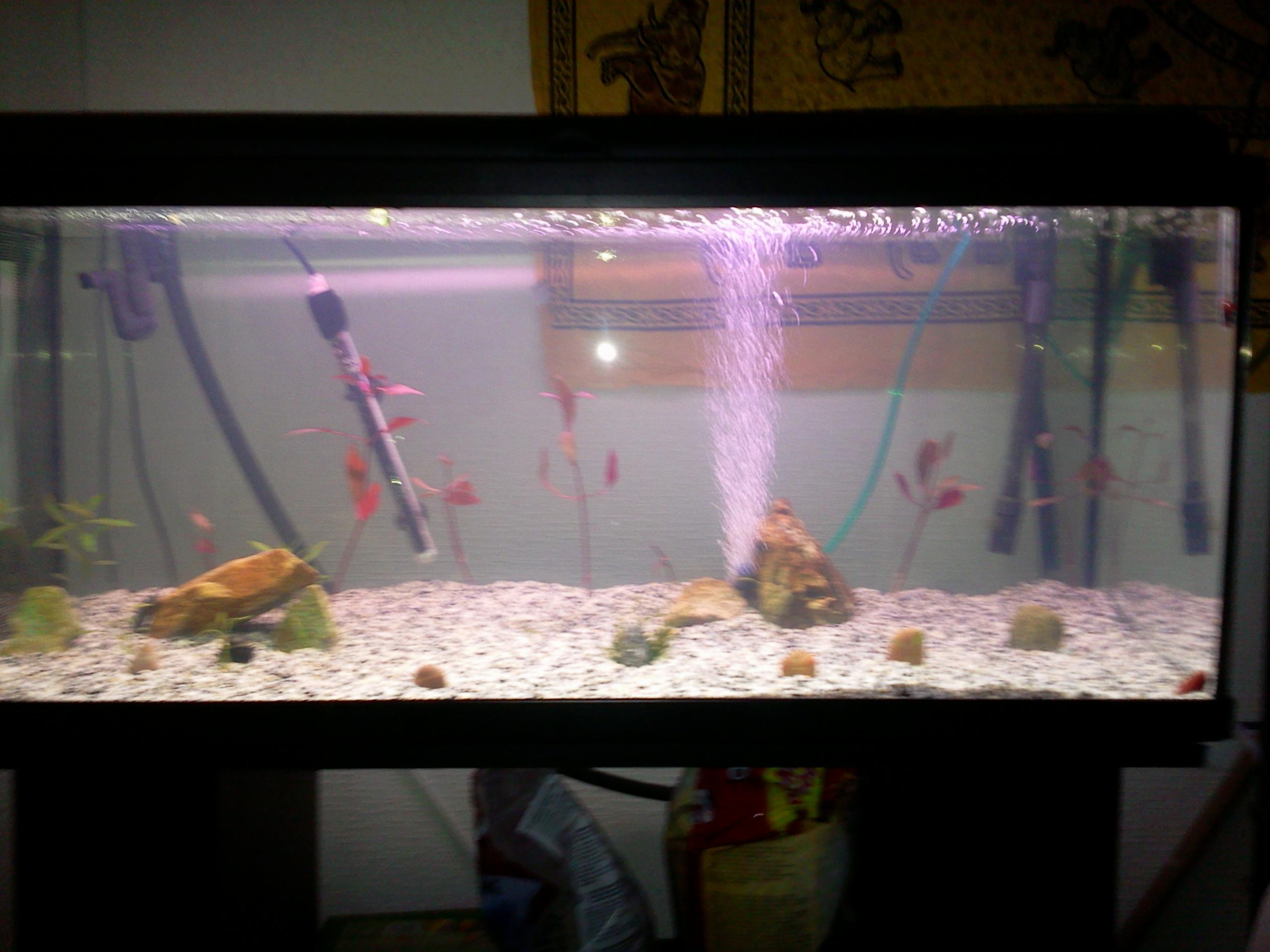 Mon aquarium N°2 Photo0072